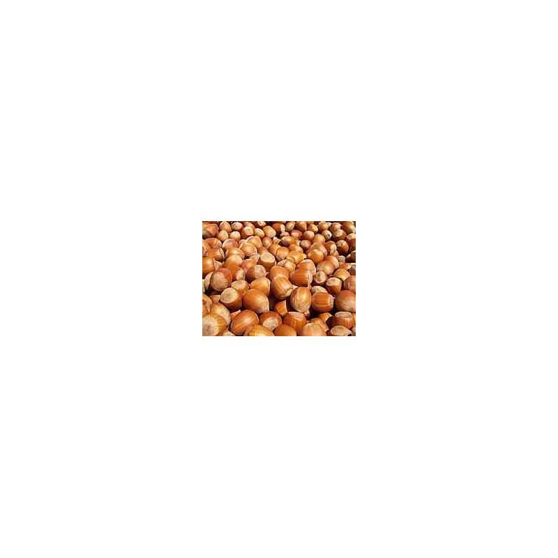 Entretien filtre compact noisettes, fruits à coque, xylit par professionnel spécialisé